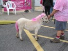 4H mini pony, Aubuchon Hardware Breast Cancer Awareness & Fundraisers, 10-20-12